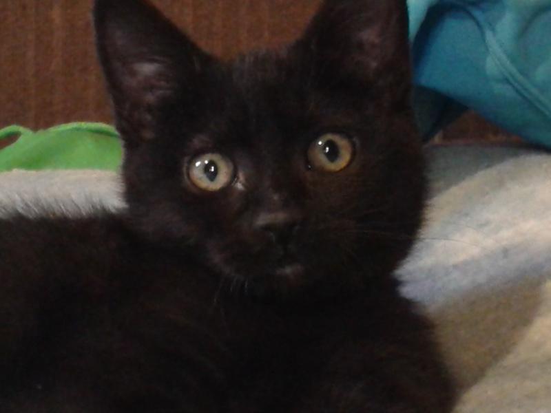 Réglisse, bébé de Juno alias Oursonne 20140517
