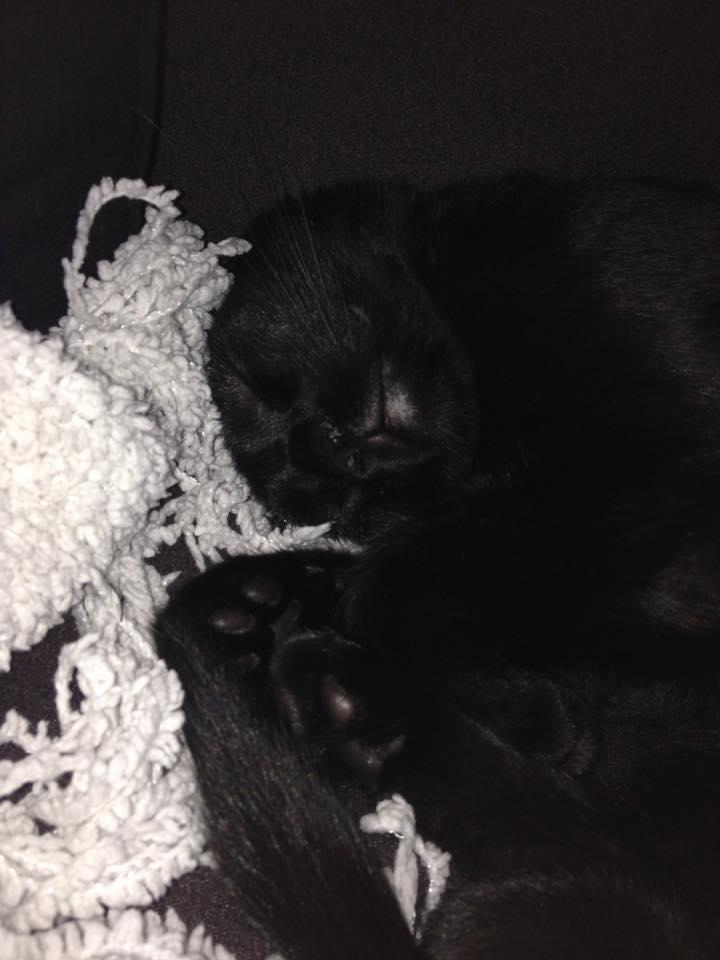 Jatika, femelle, 07.02.2014, noire Jatika11