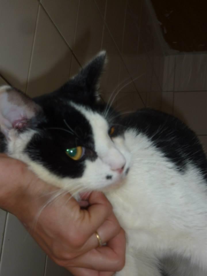 Jeannot, mâle, 15.06.2011, noir et blanc  Jeanno15