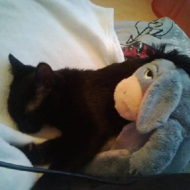 Jezzy, mâle, 28.08.201, noir Jezzy10