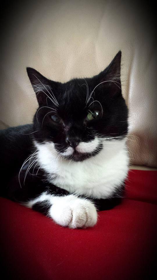 Jipsy, femelle, 2012, noire et blanche Jipsy10