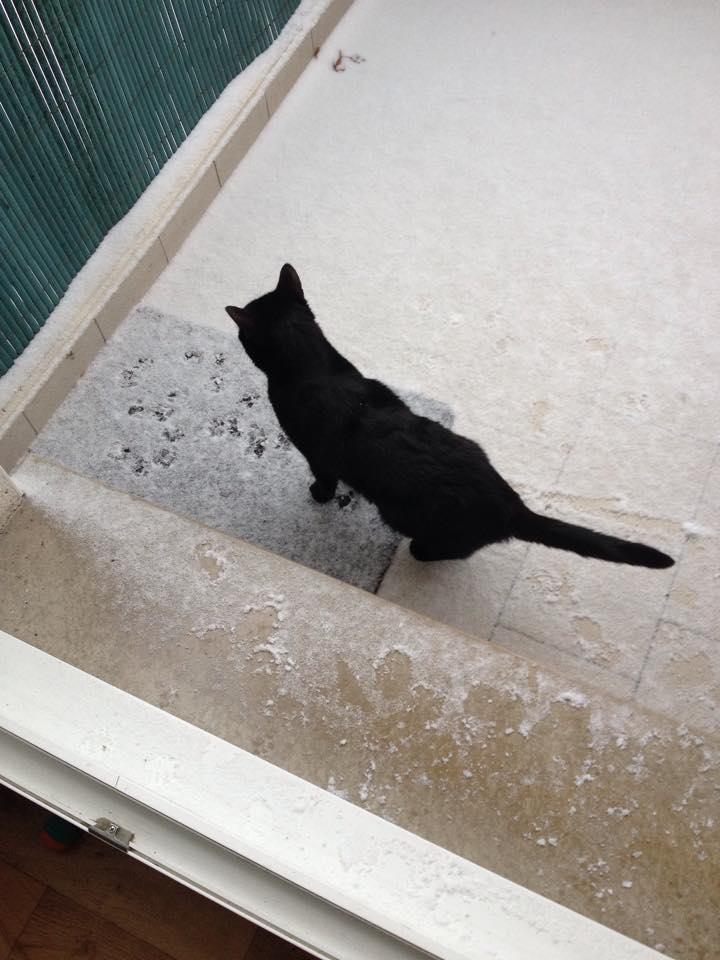 Jatika, femelle, 07.02.2014, noire Latika11