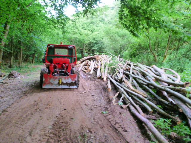 modification en forestier - Page 6 P1030610