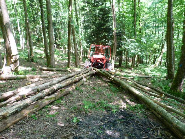 modification en forestier - Page 6 P1030611