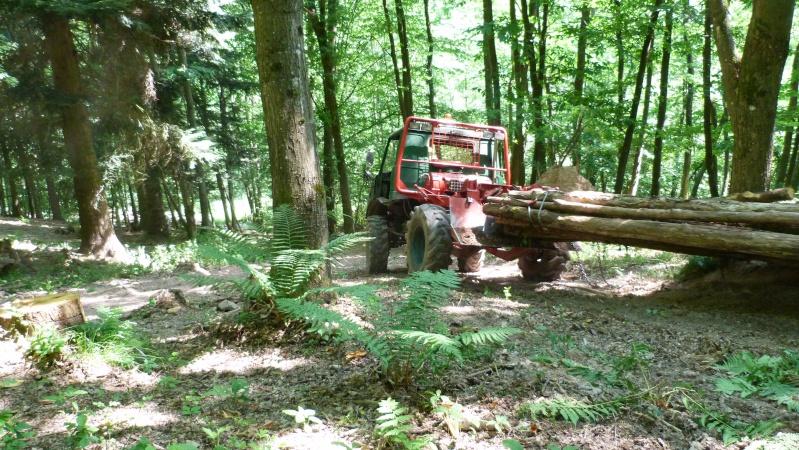 modification en forestier - Page 6 P1030612