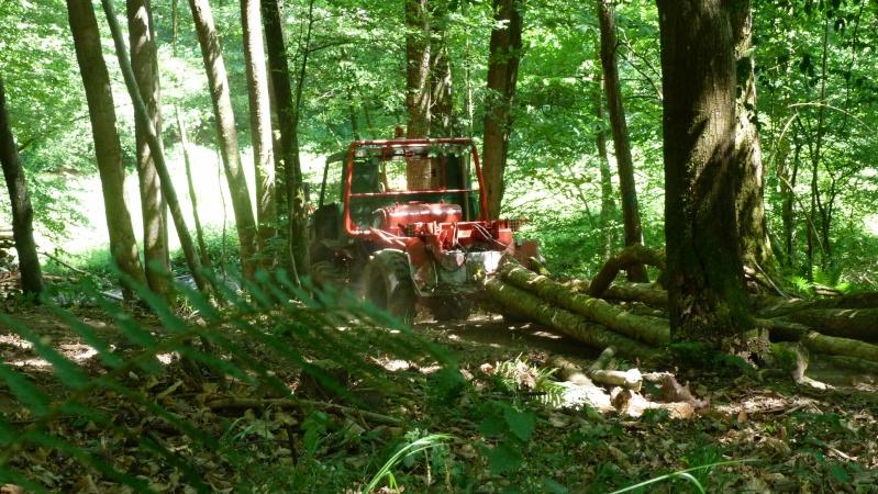 modification en forestier - Page 6 P1030613