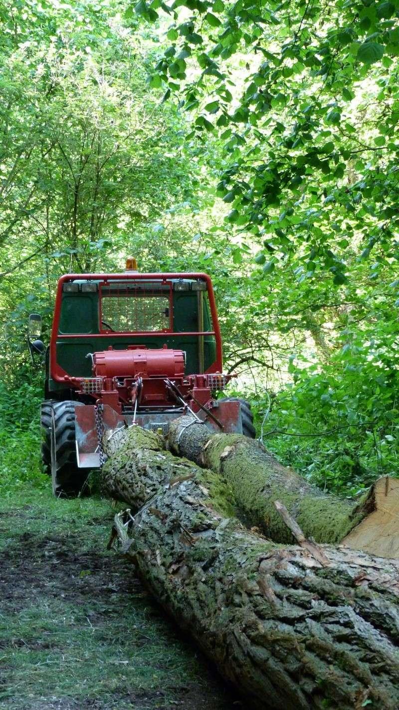 modification en forestier - Page 6 P1030614