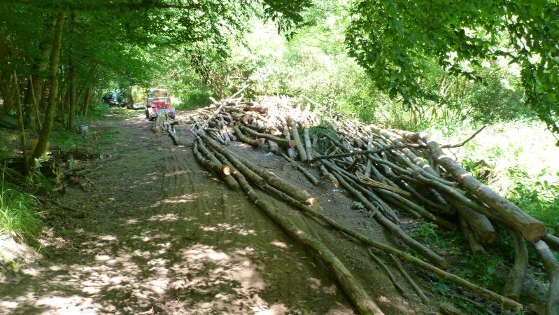 modification en forestier - Page 6 P1030615