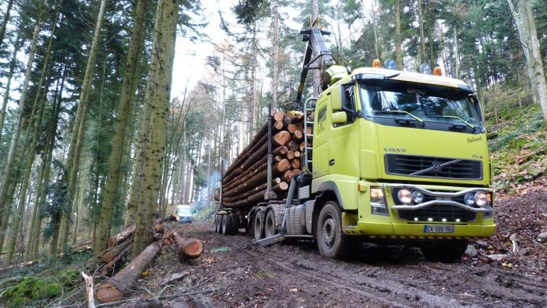 modification en forestier - Page 9 P1040111
