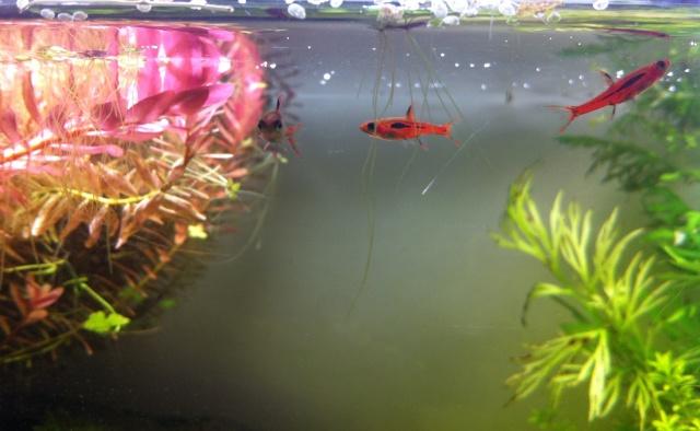 Présentation de mes aquariums Fa110