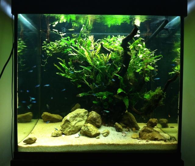 Présentation de mes aquariums Fa200l10