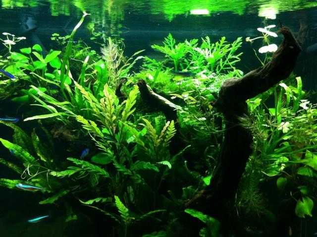 Présentation de mes aquariums Fa412