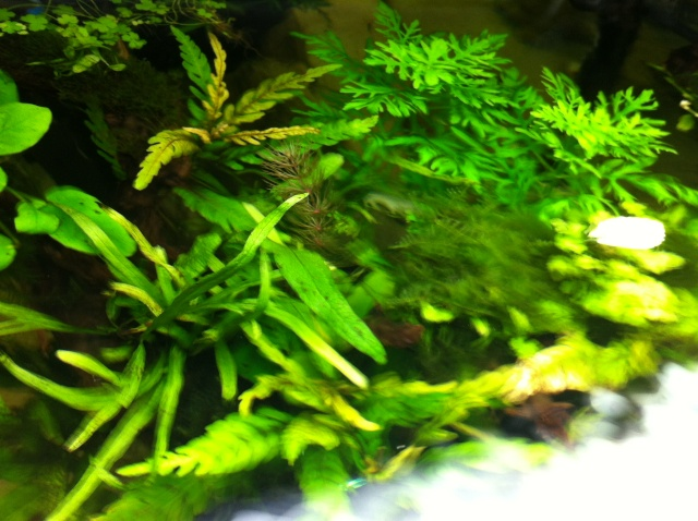 Présentation de mes aquariums Fa510