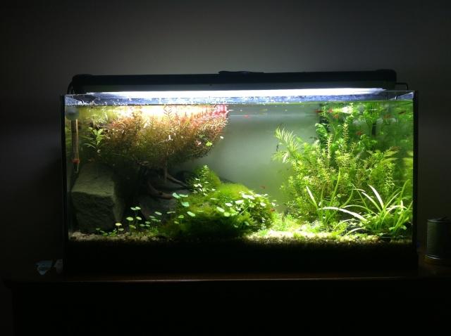 Besoin de conseils pour un nouvel aquarium  - Page 3 Fa54l10