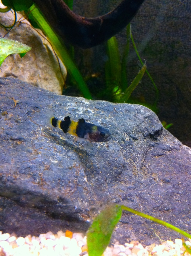 Présentation de mes aquariums Fa611