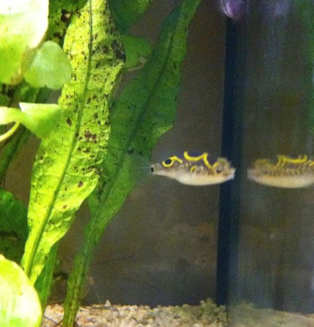 Présentation de mes aquariums Fa811