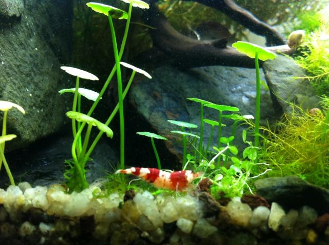 Présentation de mes aquariums Img_8111