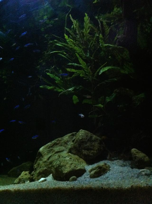 Présentation de mes aquariums Img_8211