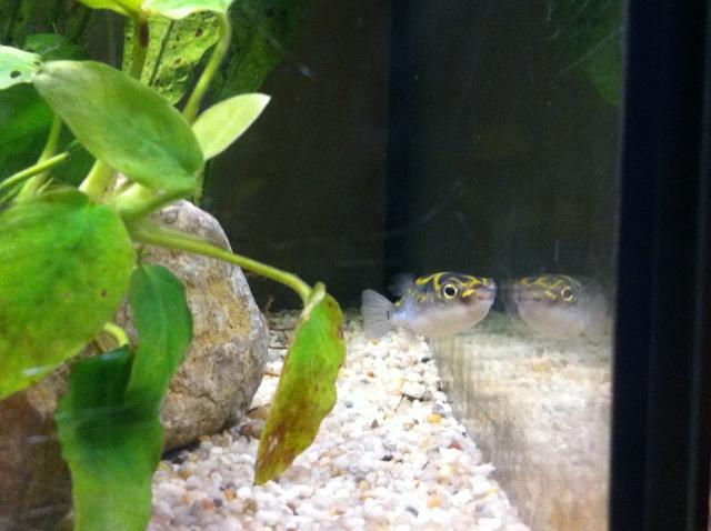Présentation de mes aquariums Img_8213