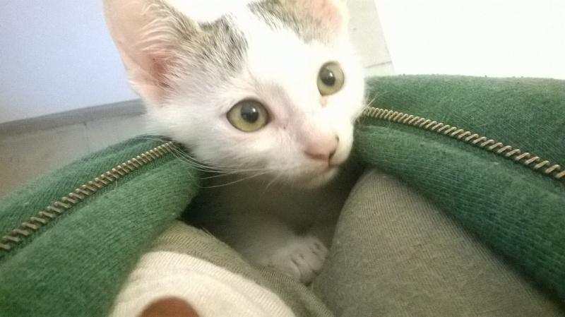 Junky, chaton mâle Wp_20112