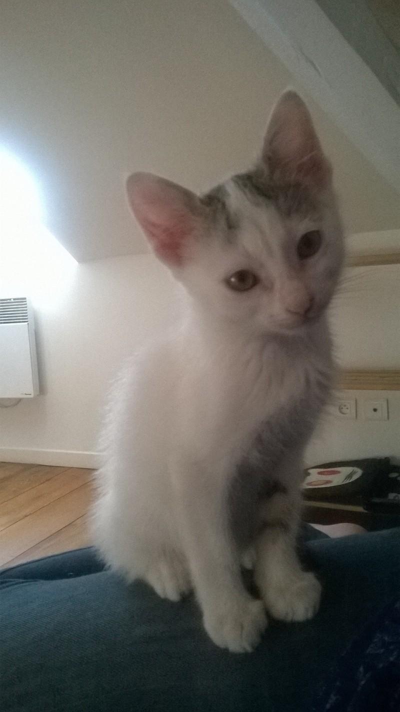 Junky, chaton mâle Wp_20113