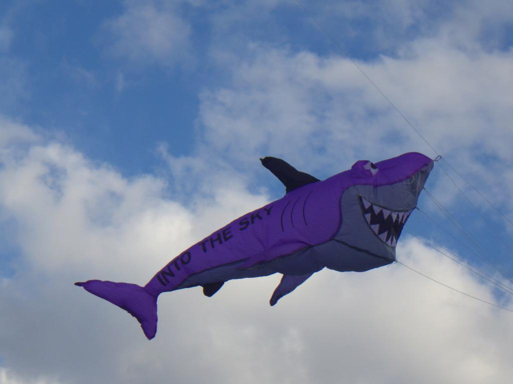 plan du requin T-burcio Imgp0711