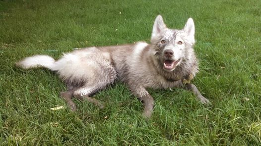 HOTM Chat: October - Muddy Husky - Page 2 10422310