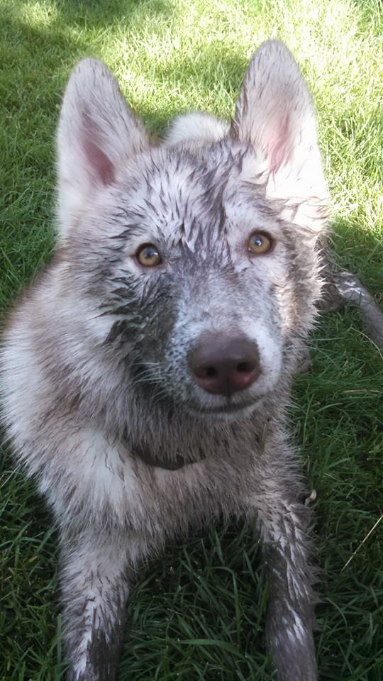 HOTM Chat: October - Muddy Husky - Page 2 10527512