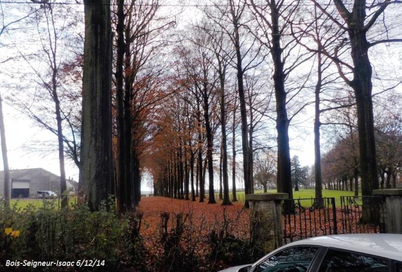 CR du samedi 6/12/14 dans le Brabant wallon 4913