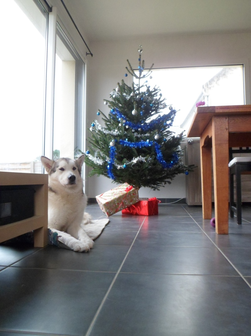 C'est bientôt Noël ! Sam_1012