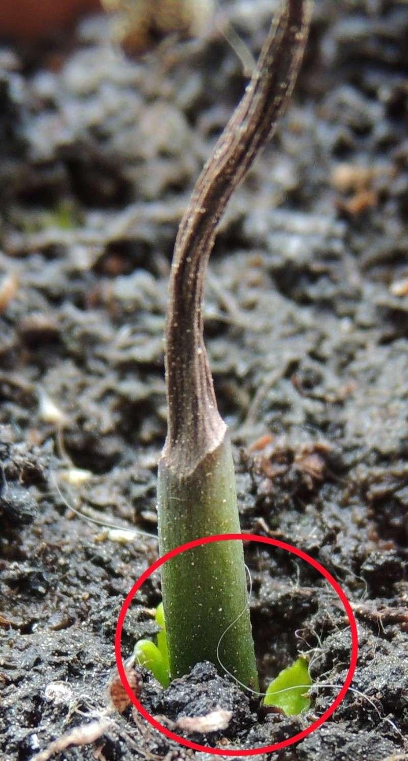 Planter une hampe de dionée - Page 6 Dscn1223