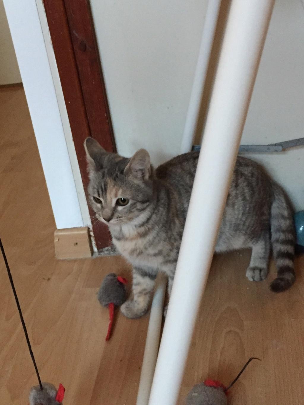 OLYSIE non adoptable Fullsi15