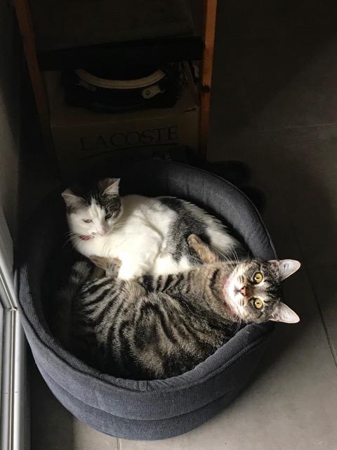 DILILI et ELINOR adoptables ensemble Image265