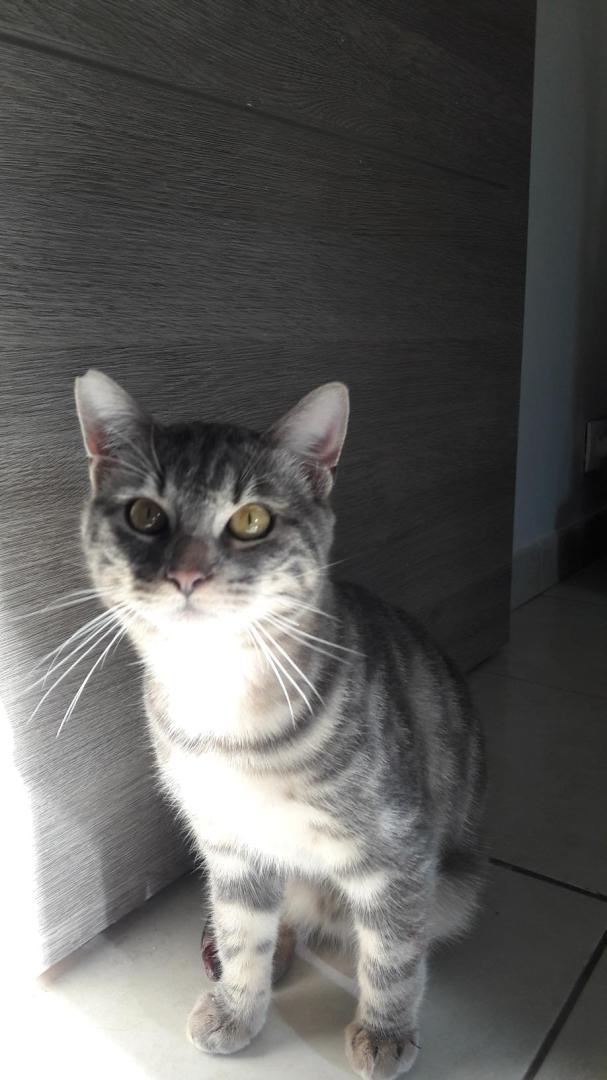 CHILLO  Image667