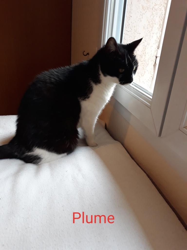 PLUME et FRIPOUILLE Image91