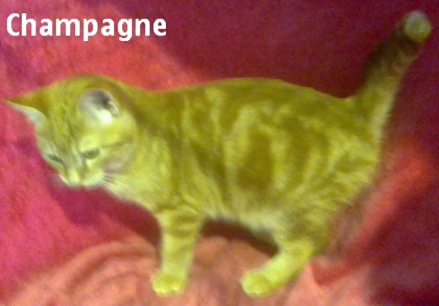 CHAMPAGNE LISTEL Img_1318