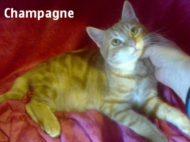 CHAMPAGNE LISTEL Img_1319
