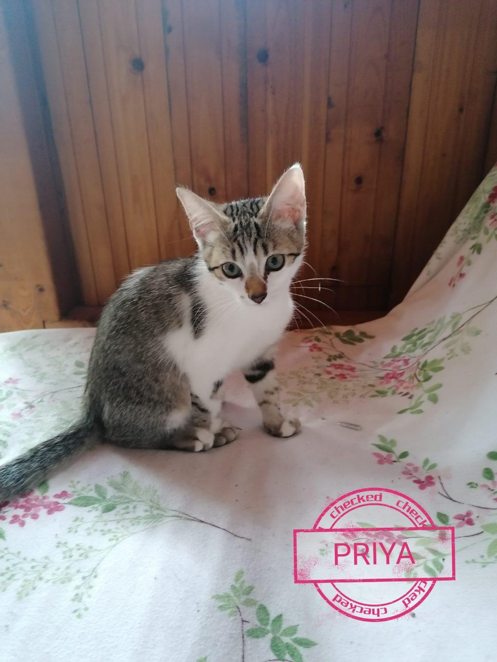 PRIYA - HINDI 2- DEVHA 3 PONGAL KARISMA  Img_2627