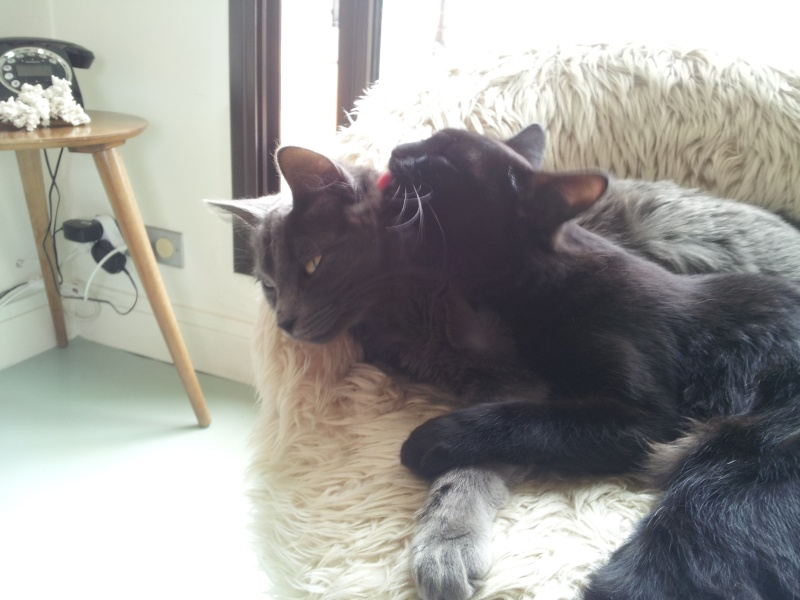 HELIO (Whiskas) et NEL (Giddy) - Page 3 20140611
