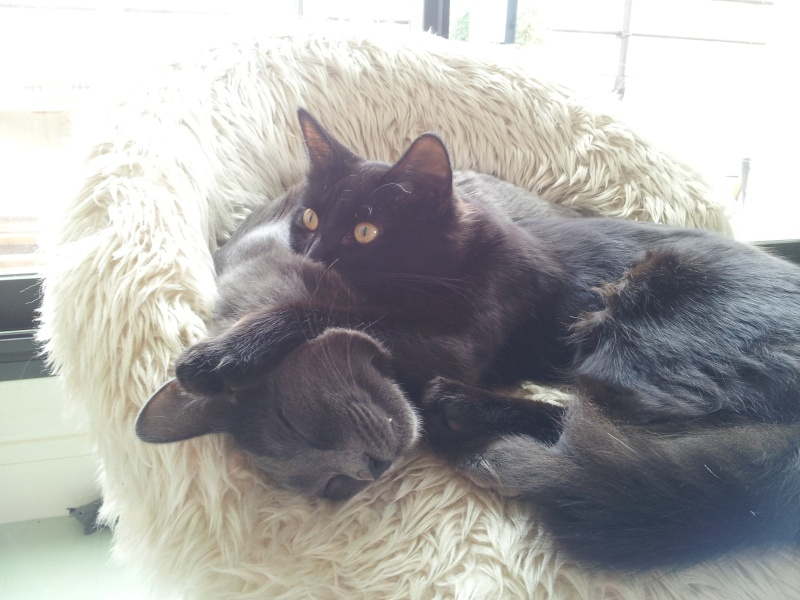 HELIO (Whiskas) et NEL (Giddy) - Page 3 20140612
