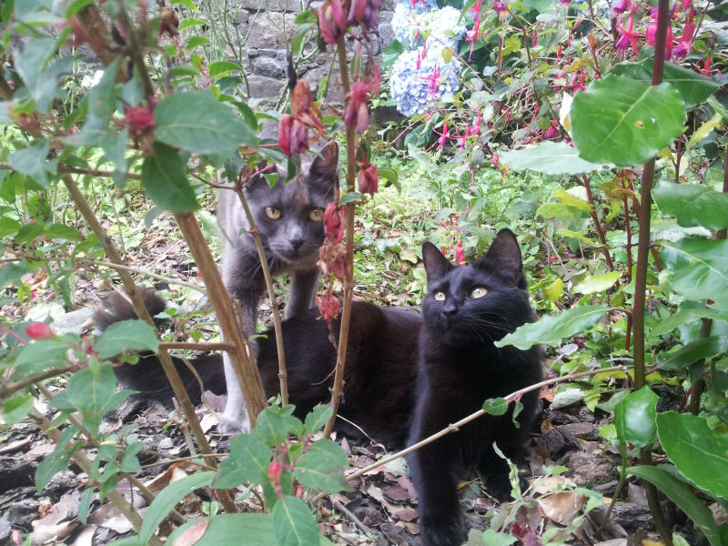 HELIO (Whiskas) et NEL (Giddy) - Page 3 20140810