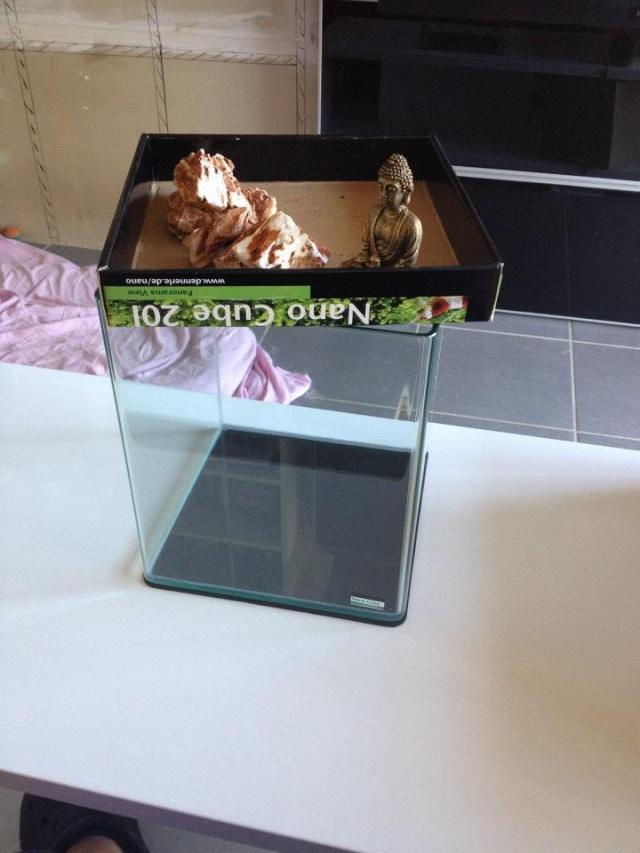 Création aquarium pour un Betta  10387310