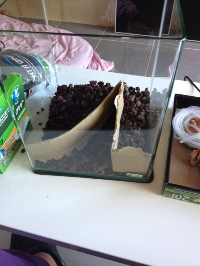 Création aquarium pour un Betta  10415710