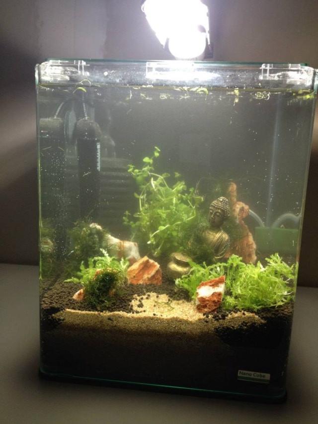 Création aquarium pour un Betta  10625110