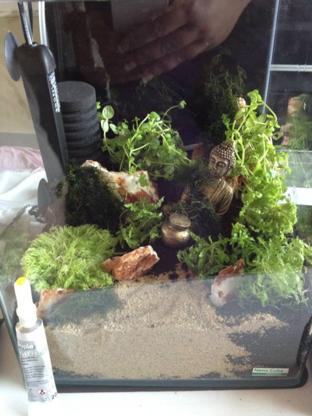 Création aquarium pour un Betta  10639610