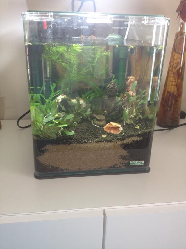 Création aquarium pour un Betta  Nano2010