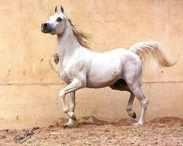 Horses of Athéna 3157610