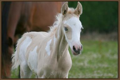 Horses of Athéna Bv000010