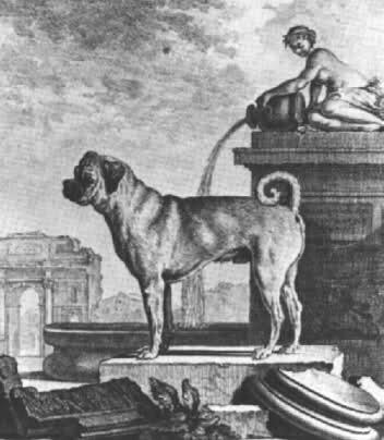 Les chiens de Marie Antoinette 29uycl10