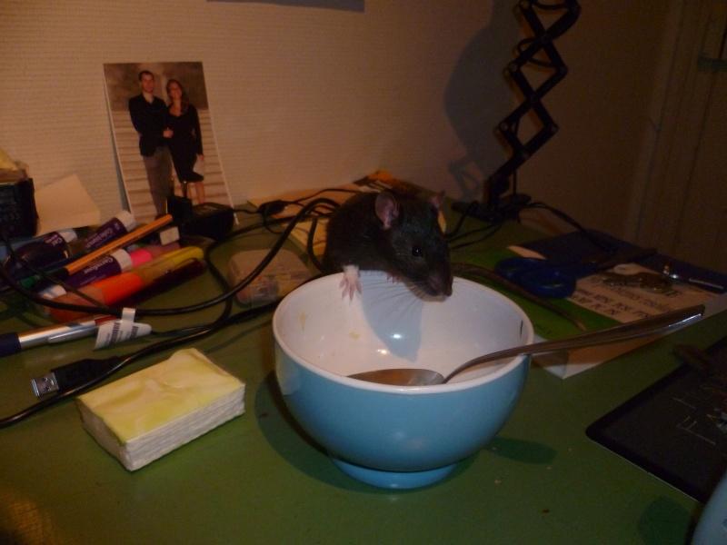 Ma joyeuse bande de petits hobbits joufflus (et poilus !) P1070611